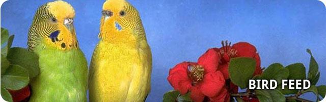 northern gate birdfeed